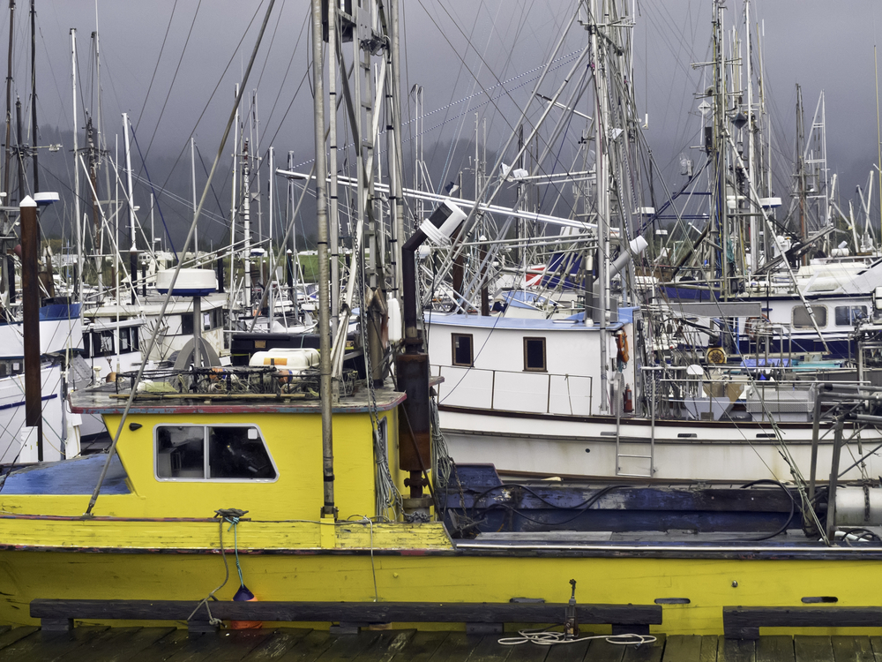 海外の漁業